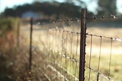 Barbs & Bokeh - HFF (TuthFaree) Tags: rural ga fence wire bokeh farm elements hff canon50mmf12l swga fencefriday