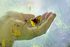 delicacy (eggii) Tags: flowers butterfly exposure hand meadows double