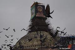 Boudha Stupa 5 (Bina Bantawa) Tags: nepal pigeons unescoworldheritagesite renovation afterquake