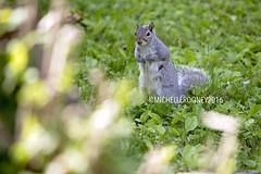 IMG_4619eFB (Kiwibrit - *Michelle*) Tags: tree grass birds woodpecker squirrel maine feeder chipmunk monmouth 2016 061916