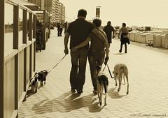 Belgian coast (Natali Antonovich) Tags: portrait dog dogs monochrome animal animals walking seaside couple walk pair blankenberge lifestyle together promenade relaxation seashore seasideresort accordance belgiancoast seaboard heandshe