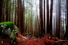 NorthShore_Trail4 (revolutionsports.eu) Tags: race northshore biking squamish mountainbikes framebuilder testofmetal allmountain carbonbikes konstructive