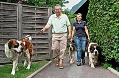 Sen-Bernar (welenna) Tags: senbernar bernhardiner hund hunde animals dog dogs tiere people leute fence