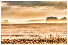Misty morning (Matt Ibbs) Tags: morning summer mist june early nikon outdoor pole fields rano mga 2016 czerwiec lato wielkopolska niemierzewo d7200 lubosz