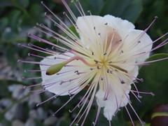 White flower (Hlne_D) Tags: france flower fleur museum marseille muse paca provence vieuxport bouchesdurhne provencealpesctedazur mucem musedescivilisationsdeleuropeetdelamditerrane hlned