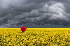 Thunder Rolls (Carlos Gotay Martnez) Tags: field sky landscape red umbrella nature clouds rain outdoor outside cloud weather storm thunder ominous power eerie minimalist openspace rapeseed menacing stormyweather rapeseedfield menace