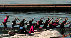 WORKING HARD (marc falardeau) Tags: toronto canada water spring nikon may lakeontario dragonboat races amateur sundat riteofspring gayphotographer d300s