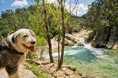 The Pup enjoys the hike (Gretcholi) Tags: spain jaen cazorla 2013