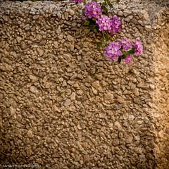 Textures (bawbwa) Tags: urban square graphics flickr abstraction minimalism geometrics barbaraheide
