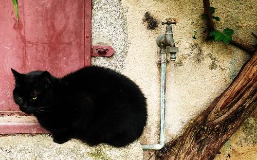 1351 The Black Cat
