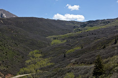 Spring Comes to the Mountains (San Francisco Gal) Tags: mountain tree nature forest landscape spring oak ridge national valley aspen sal lasalmountains mantila