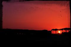 Beneath. (#odie.the.thiiird) Tags: sunset italy parco rome roma canon photography europa europe italia tramonto fotografie photographie horizon pinoy degli fotografa banzon flickrfriday acquedotti fotoraflk    tumblr 97percent blinkagain instagram odieson  odiethethiiird flfrnotok