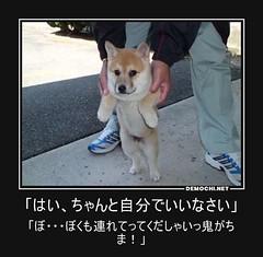 「はい、ちゃんと自分でいいなさい」 「ぼ・・・ぼくも連れてってくだしゃいっ鬼がちま!」 #犬 #桃太郎 (Demochi.Net) Tags: life cute sexy japan fun japanese motivator culture 日本 ペット 猫 demotivator 金 家族 結婚 ゲイ 女 子供 おっぱい 愛犬 政治 社会 巨乳 文化 眼鏡 教育 demotivators 経済 女性 初恋 r18 女子 カップル 子猫 女装 お笑い motivators 会社 少子化 企業 ユーモア 恋 悪い 格差 風刺 一言 デモチ 大喜利