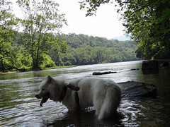 """Chase Is In A Calm Shenandoah River • <a style=""""font-size:0.8em;"""" href=""""http://www.flickr.com/photos/96196263@N07/9354846956/"""" target=""""_blank"""">View on Flickr</a>"""