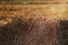 hay at sunset (charlieriz) Tags: bokeh hay jupiter9