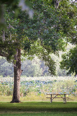 (MissKaylaBrooke) Tags: statepark park trees nature beautiful grass table outside outdoors colorful picnic pretty view state bright bend calming sunny calm greenery serene simple brazosbend brazos