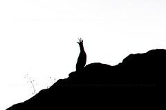 ) ) (Puckyireth) Tags: animal silhouette fauna canal central southern silueta roques chamois rebeco isard queralbs pyrenaica rupicapra sarrio hidroelèctrica puckyireth daiódedalt daió mònicautjés pyrenäengämse isardrebecorupicabrarupicapra col·lector