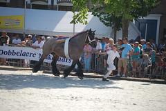 trekpaardkeuring ijzendijke 21072013 3812 (jo_koneko_san) Tags: horses horse holland netherlands cheval nederland zeeland chevaux paard hollande zeeuwsvlaanderen 2013 ijzendijke parden trekpaard zeeuwstrekpaard trekparden