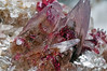 roselite, cobaltoan calcite (géry60) Tags: morocco calcite tazenakht roselite cobaltocalcite ouarzazateprovince soussmassadraâregion cobaltoan bouazerdistrictbouazzerdistrict rosélite bouazereastdeposit bouazer