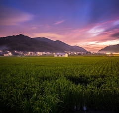 PhoTones Works #3425 (TAKUMA KIMURA) Tags: autumn sunset house mountain mountains home nature field japan landscape evening twilight scenery rice dusk hut       waseda  kimura       takuma   gh3    photones