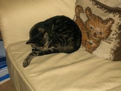 2004-06-21- De Katten - 11 (TeamNagele) Tags: huisdieren kruimeltje