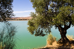 Turquoise lake (Keith in Exeter) Tags: blue espaa cloud lake color colour tree green water landscape spain mediterranean bright turquoise teal olive bluesky calm andalucia clear translucent serene mlaga ardales embalse pellucid embalsedelcondedeguadalhorce bluishgreen untroubled photosandcalendar vigilantphotographersunite vpu2 vpu3 vpu4 vpu5 vpu6 vpu7 vpu8 vpu9 vpu10 copyrightkeithbowden2013 ardalesnaturalpark mlagalakedistrict