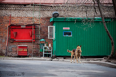 maintenance corner   (Tania's Tales) Tags: street city red dog color green dogs animal animals barn puppy strada hangar guard hound streetphotography canine doghouse pup nosmoking broomstick   cur      ilcane       guardingdog  fotografiastradale    taniastales  firefightingequipmentstand firepointstand