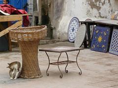 Cats of Essaouira (karina robin travel photography) Tags: voyage travel cats robin cat chats reisen northafrica morocco maroc katzen essaouira marokko karina nordafrika