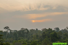 GP04UZK (Greenpeace International) Tags: trees green beauty sunsets nationalparks biodiversity forestscampaigntitle foreststopography