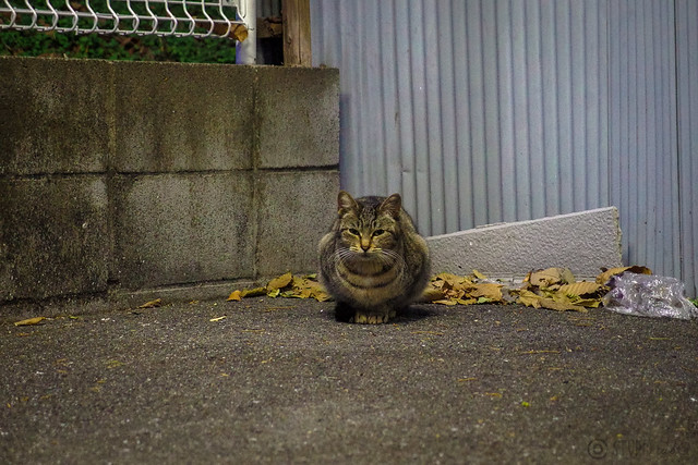 Today's Cat@2014-01-06