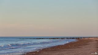 A lone seagull on the beach