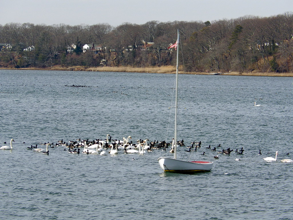 The world 39 s best photos of docks and rowboat flickr hive for Belmar nj fishing boats