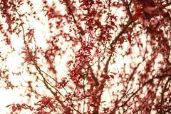 Le Printemps (Snowflakesarewhite) Tags: flowers trees iris inspiration flower tree love nature photography spring bomen pretty blossom blossoms natuur lente printemps bloesem slootheer snowflakesarewhite heartfilledminds
