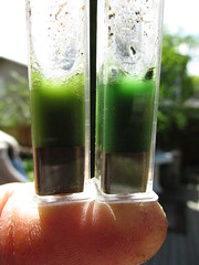 Ph Factor (Pictoscribe - Off in The Wilderness Til 7-30) Tags: test 14 may soil ph factor 2014 pictoscribe