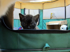 kittens have learned to escape (Jimmy Legs) Tags: