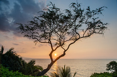 Sunset, Maui, Hawaii (guzzzt) Tags: ocean sunset sky sun tree water clouds hawaii unitedstates maui kihei sigma175028 d7000