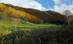 ~      @ Shiga Kogen , ~ (PS~~) Tags: road travel autumn trees