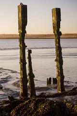 Barely standing, Tilbury (Sean Hartwell Photography) Tags: sea england thames sunrise landscape seaside mud estuary riverthames essex tilbury 2470mm llens easttilbury thamesestuary coalhousepoint canon6d