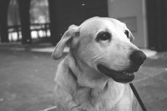 Nina (h.anderle) Tags: winter blackandwhite bw dog pet pets snow cute 20d love monochrome animal animals canon puppy happy mono canon20d adorable canine aww doggy pup awww simple matte puppylove dogportrait canonista simplephotoshop teenphotog