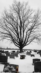 Ewing Presbyterian Cemetary (Tim Loesch) Tags: tree church cemetery newjersey watertower nj graves gravestone mercercounty selectivecolor ewingpresbyterianchurchcemetery