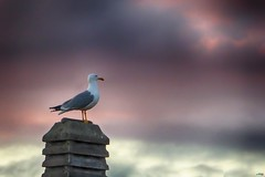 Sola ante el peligro (juantiagues) Tags: nubes tejado gaviota chimenea juanmejuto juantiagues