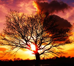 Sunset Tree At Henwick Hall (Gary Chatterton 3 million Views Thank You All) Tags: sunset sun colour tree nature flickr northyorkshire selby henwickhall