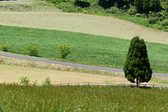 7Ikari Field Farm (anglo10) Tags: field japan kyoto