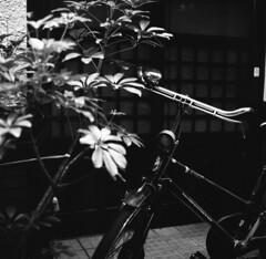 160430_ZenzaBronicaS2_002 (Matsui Hiroyuki) Tags: fujifilmneopan100acros zenzabronicas2 nikonnikkorp75mmf28 epsongtx8203200dpi