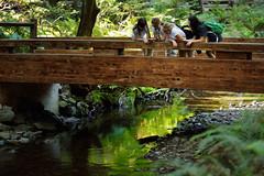 Appreciating Nature (JasonCameron) Tags: park bridge trees girls reflection water girl america river wonder fun woods san francisco stream play national scouts redwood muir learn bridging gather