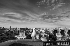 The Portrait. Rome. Sep2015. (fernandobarcenapena) Tags: fororomano gabiota roma portrait retrato seagull gaviotas blackwhite blanconegro cielo sky streetphotography fotografiacallejera