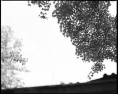 Roof top (the fencepost) Tags: trees blackandwhite 120 mamiya oregon mediumformat portland d76 ilford fp4 rz67 selfdeveloped