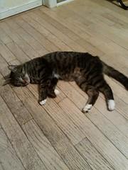 Mother Kitty (XxReaperxKittyxX) Tags: kitten kitty meow nya