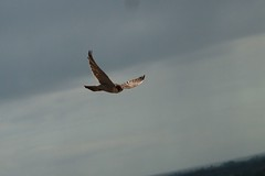 IMG_4555 (gipukan (rob gipman)) Tags: male tower female eos toren 7d kuikens slechtvalk olv langejan preybird canon24105lis tokina116