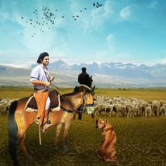 Cow-puncher (jaci XIII) Tags: horse dog co field animal cowboy farm campo cavalo fazenda gaucho ewe ovelha gacho vaqueiro